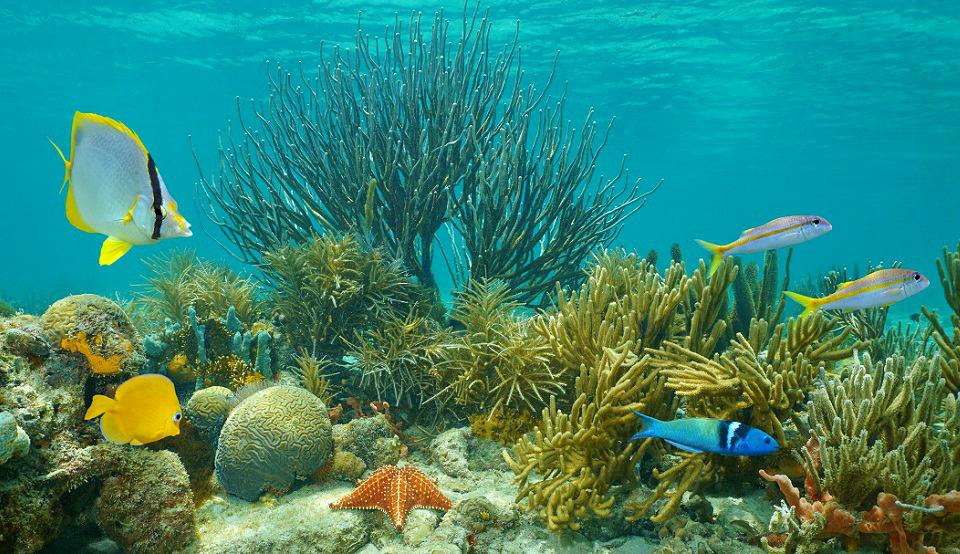 5 motivos para você beber água. Seu corpo , um verdadeiro aquário!